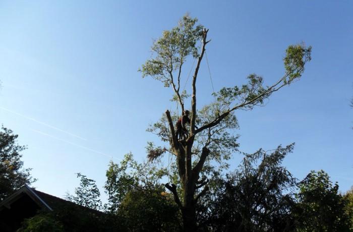 Verwijdering van boom